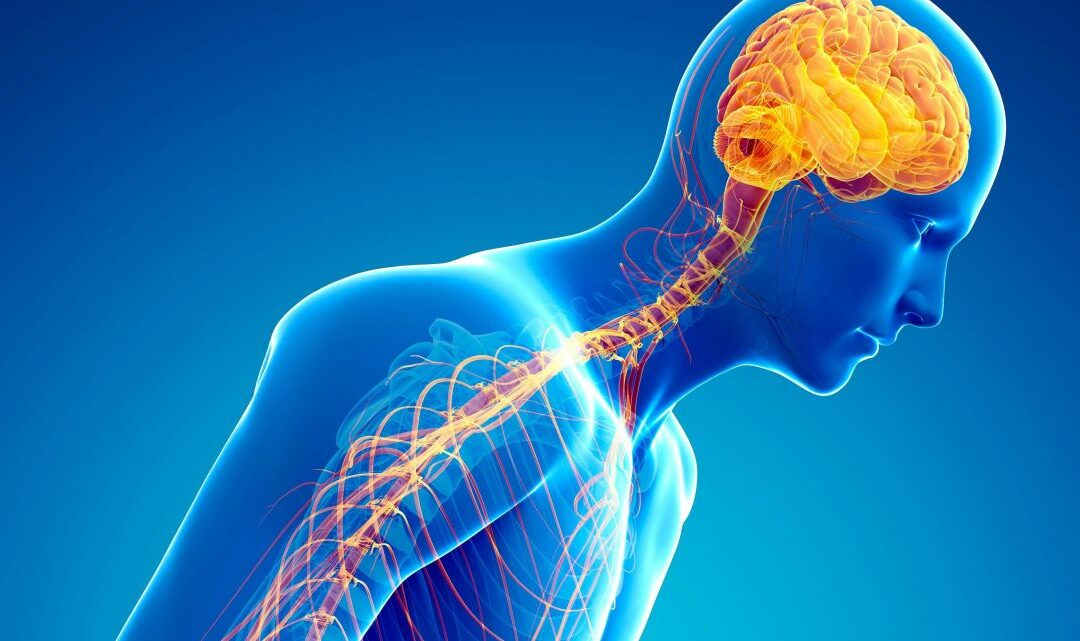 Is It Possible to Prevent Parkinson's Disease?